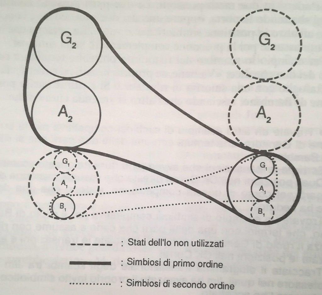 Grafico simbiosi di secondo ordine